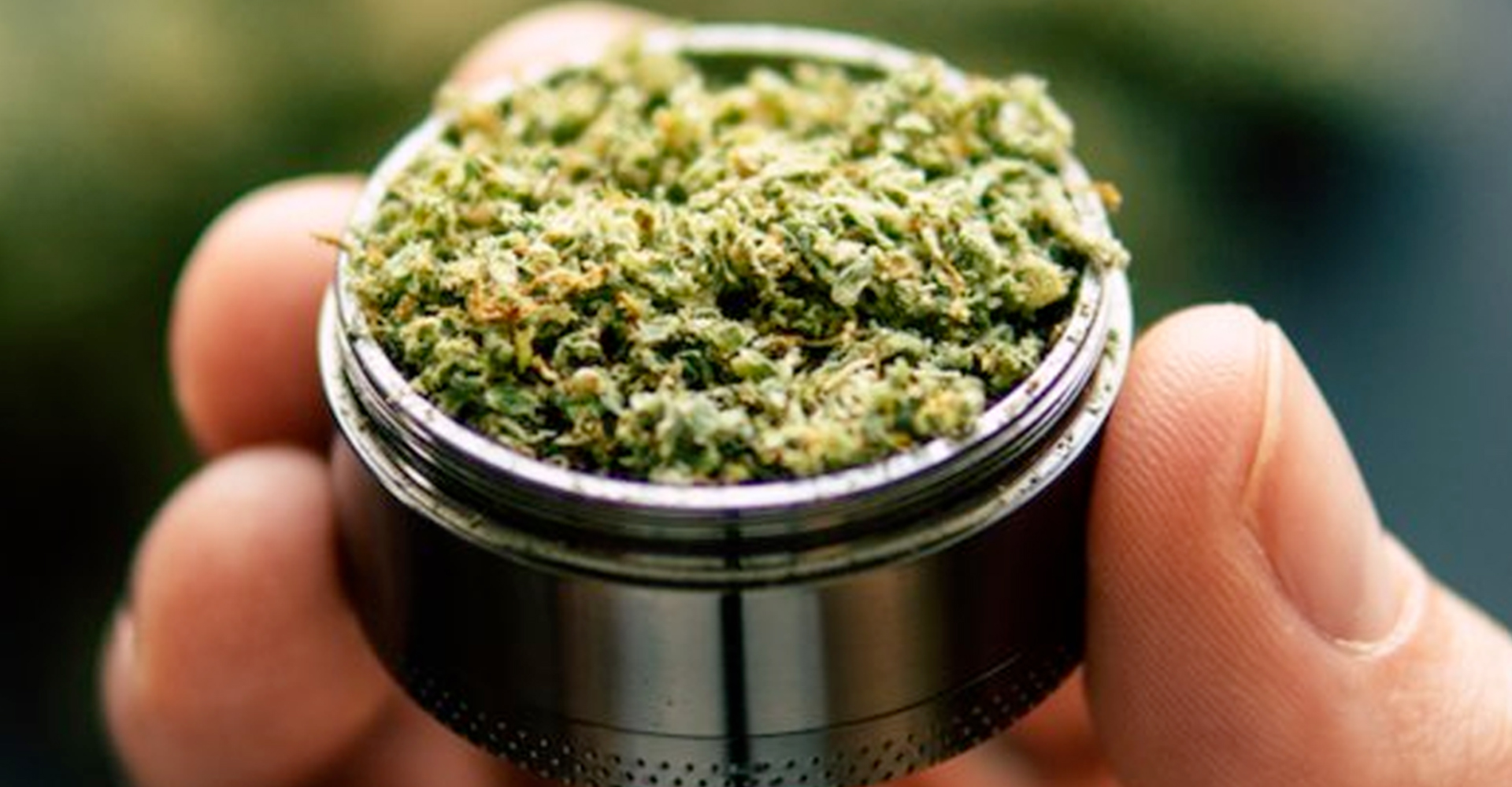 marijuana hemp in grinder